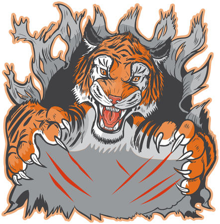 clawing: Cartoon clip art illustration template of a tiger mascot ripping or clawing out of the background. Vector layers are set up for easy placement of custom design elements under the paws and claw marks.