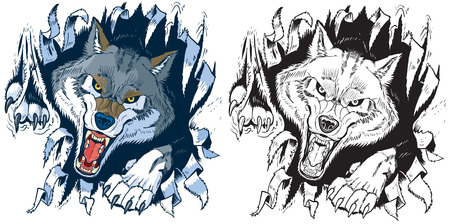 Vector cartoon clip art illustration set of an angry gray or timber wolf mascot ripping, punching, or tearing through a cloth or paper background in color or black and white. Stock Illustratie