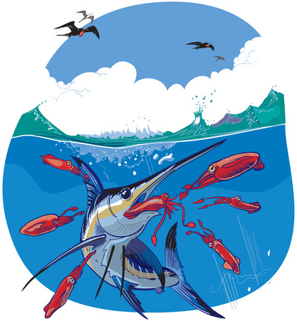 Vector cartoon clip art illustration of a blue marlin fish chasing and eating red squid under water while frigate birds fly in the sky above. Illusztráció