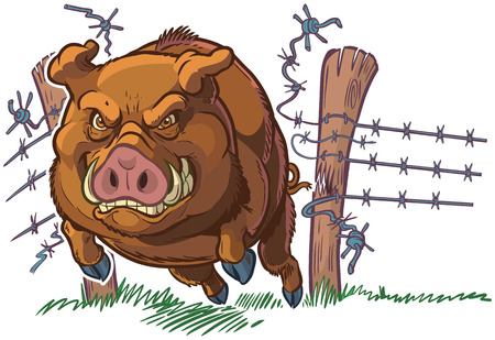 Vector cartoon clip art illustration of a tough and mean pig or hog or wild boar mascot crashing through a barbed wire fence. Character and background are on separate layers.
