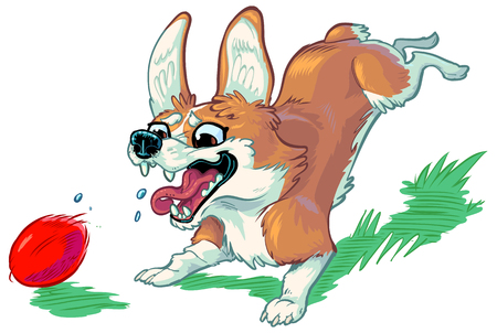 Vector cartoon clip art illustration of a cute and happy welsh corgi dog or puppy chasing a red ball, barking with mouth open, and toungue hanging out. Important elements in layers.