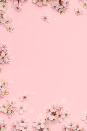 Framework vertical from cherry blossoms on pastel pink background. Flat lay. Copy space. Top view Banque d'images