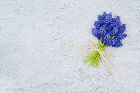 Spring flowers. Blue muscari spring flowers grape hyacinth on white grunge stone background. Top view, flat lay, copy space