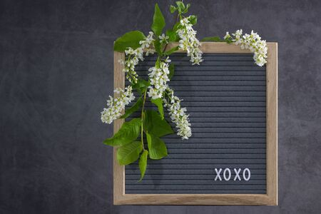 Beautiful bird cherry tree flowers frame. Mayday tree blossom branches with xoxo text on wooden frame on grey background. Spring bird cherry blossoms frame on natural grey felt. Copy space for text.