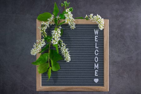 Beautiful bird cherry tree flowers frame. Mayday tree blossom branches with wooden frame and welcome text on grey background. Spring light bird cherry blossoms frame on natural grey felt.