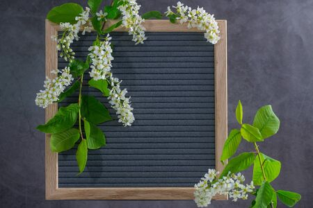 Beautiful bird cherry tree flowers frame. Mayday tree blossom branches with wooden frame on grey background. Spring light bird cherry blossoms frame on natural grey felt. Copy space for text. Flatlay