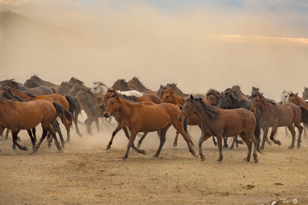A group of wild horses on a dusty field.