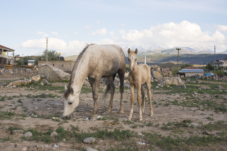 Horses in the village are years old Stock fotó