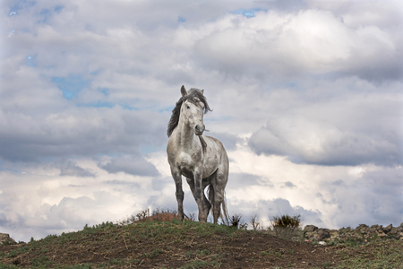 Horse alone Stock Photo