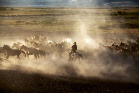 A group of horses running in the dust.