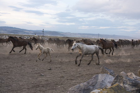 A group of old wild horses. Stock fotó