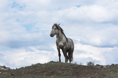 A lonely white wild horse.