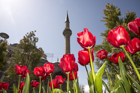 View of a mosque in between of red valerian flowers. Stock Photo