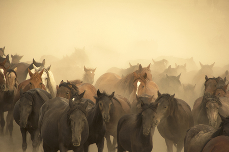 A group of wild horses in nature. Stock fotó