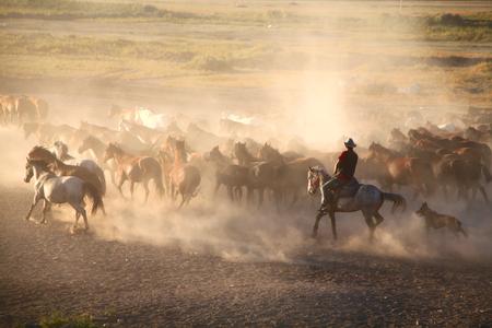Horsetail yearly - horses family 版權商用圖片