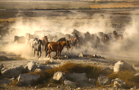 Passage of wild horses is year-round, horses 版權商用圖片