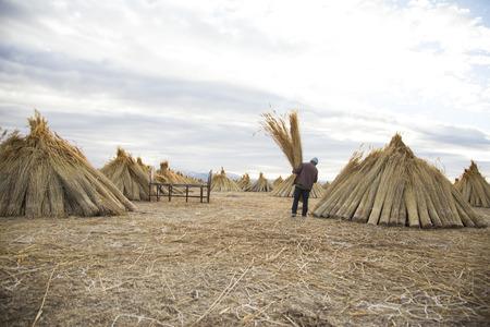 Man carrying hay - straw man, harvest 版權商用圖片