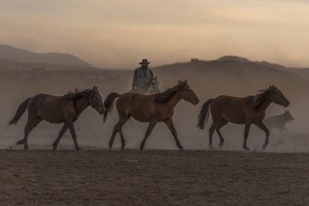 sequenced wild horses