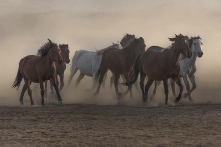 running horses, freedom