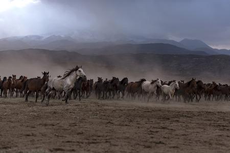annoying swarms, gathering horses