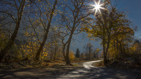 a peaceful road, walking across the long trees against nature