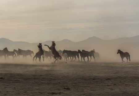 horse fight, horse racing, horse racing