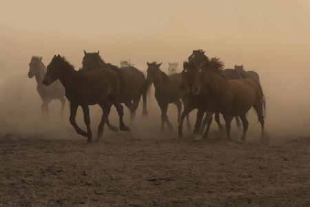 horses running wild but strong