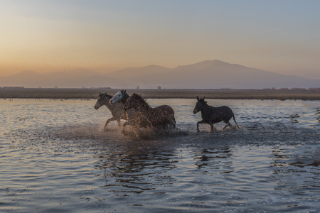 when old horses pass through the water
