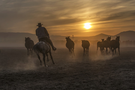 cowboy horses running towards sunset