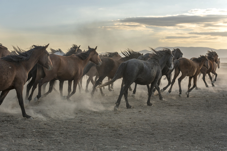 the horses are heading towards the sunrise Stock Photo