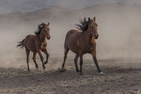 old horses, mother and daughter running