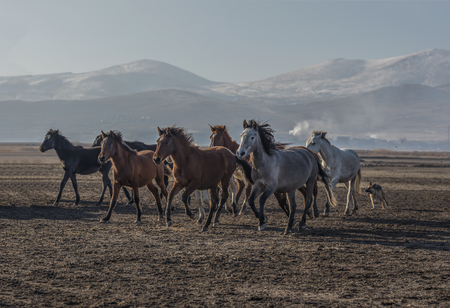 year-round horses, towards freedom
