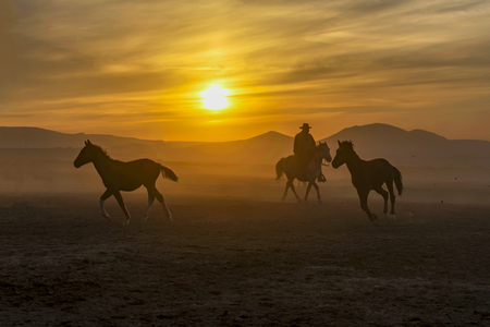 horse rider, jockey