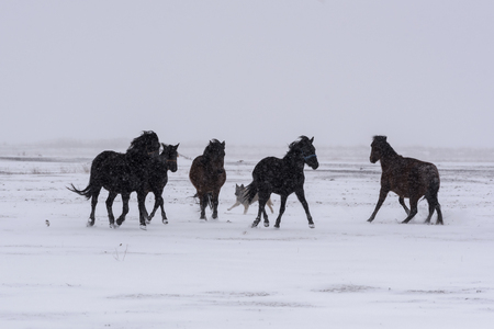 wild horse ride, free spirits