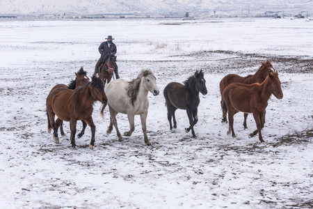 snowy horses on snow