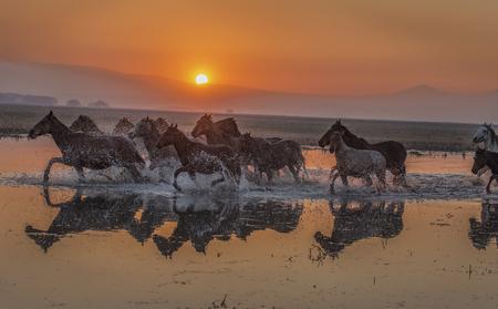 sunset horses Stok Fotoğraf