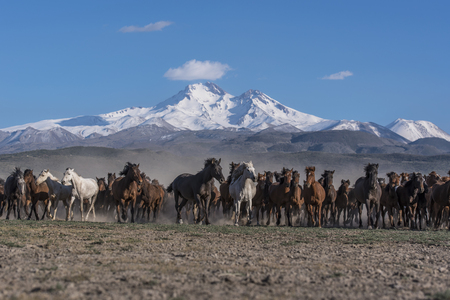 wild horses beneath the mountains