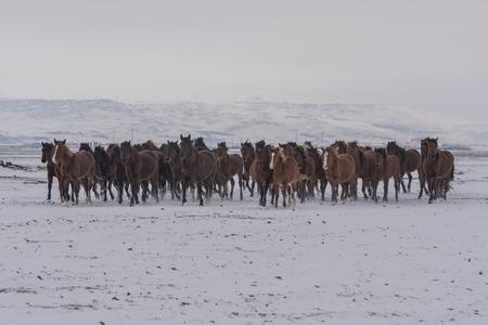horse horses in bulk, wild horses