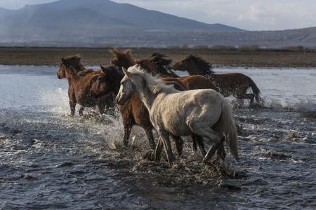 wild horses passing the teapot 版權商用圖片