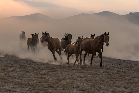 wild horses are escaping