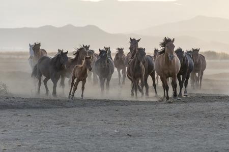 running horse, horse