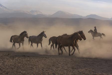 horse horse, wild horse Stok Fotoğraf
