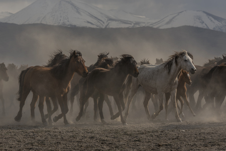 wild horse riding behind the mountains
