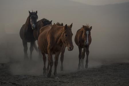 horse horse, wild horse, snakes