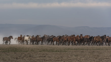 horseshoe, wild wild horses Stok Fotoğraf