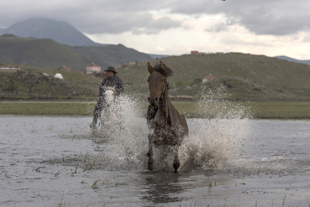 two wild horses pass by