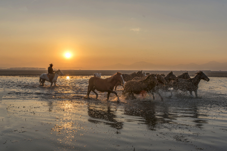 putting cowboy horses at sunset