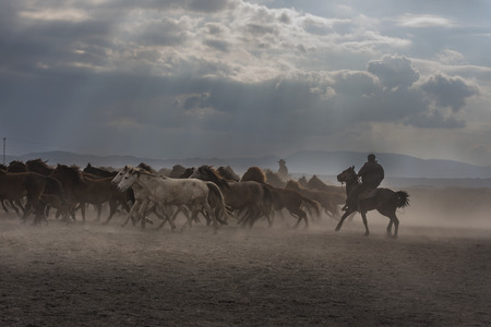 horses running under the clouds 版權商用圖片