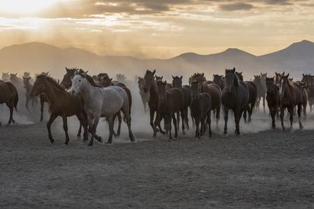 wild horse ride Stock fotó
