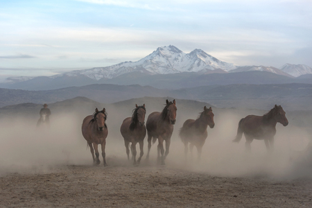 wild horses passing in front of the snowy mountain